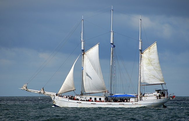 Minerva, Volker Gries, Hanse Sail Rostock 2016 , 08/2016