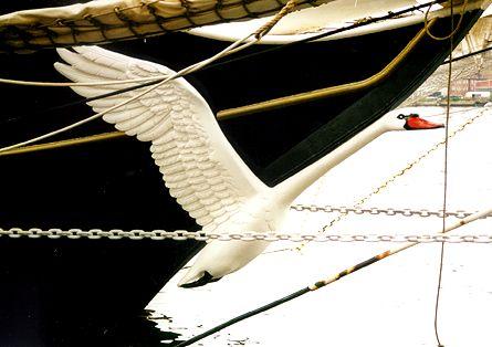 Italia, Volker Gries, Sail Flensburg 2000 / Cutty Sark 2000 , 08/2000
